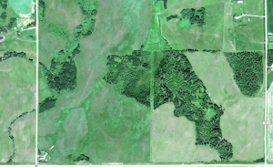 Satellite shot showing Roszko's mother's house, lower left, and a trail leading straight to her son's property, top right. [image courtesy of Google] Click to enlarge.